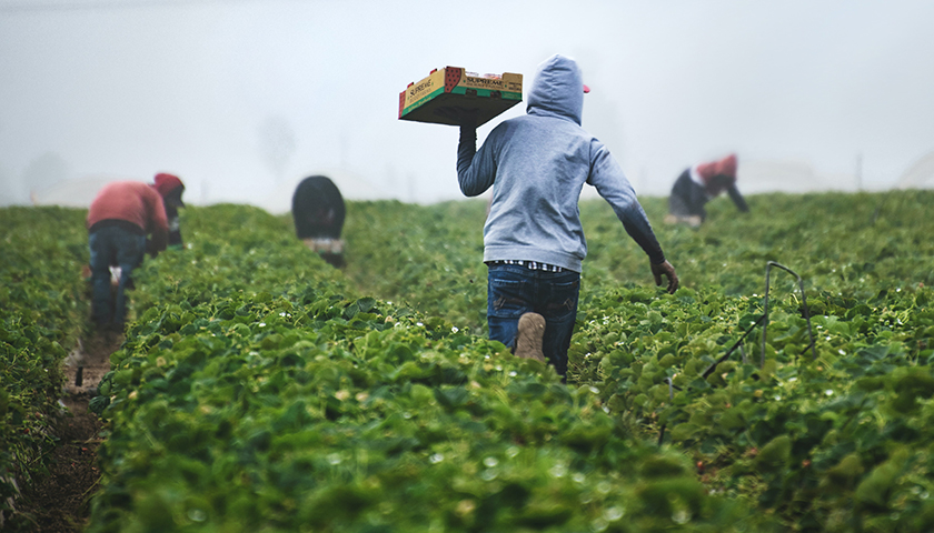 Group of farmers harvesting crops
