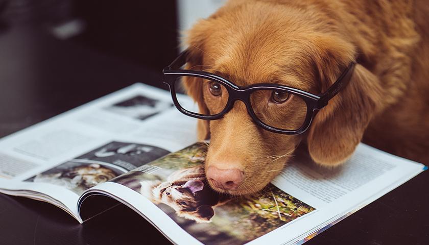 Dog lying on magazine with glasses on
